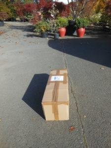 Transport d'une plante de 80cm