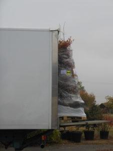 Transport d'une plante via schenker